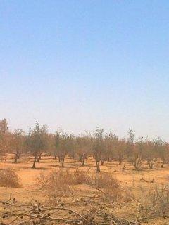 مزرعه نموذجيه للبيع في الأزرق/الأردن