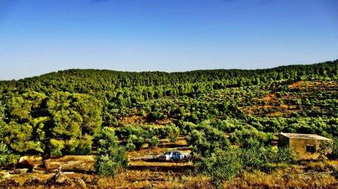 ارض للبيع ,جرش,الأردن
