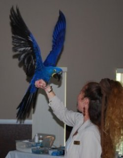 Macaw for Adoption