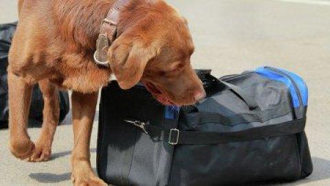 كلاب كشف القنابل