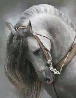 انا اردنية بيضاء اللون جميلة أخاف الله مطلقة