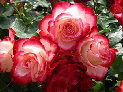 انا انسانة حنونة رومنسية جميلة واحب الجمال الباقي بعد التعارف