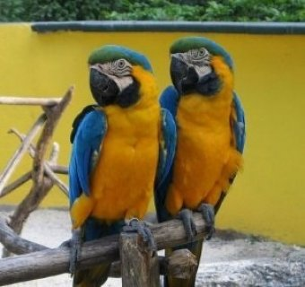blue and gold macaw for free adoption,,,,,,,,,,,,,,,,,
