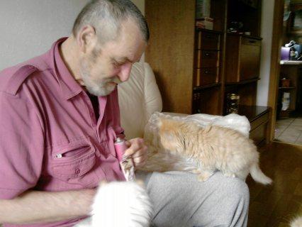 Lovely Persian Kittens