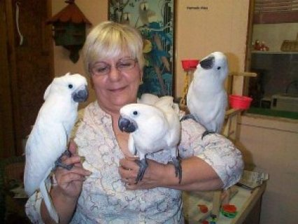 We have beautifull male and female umbrella Cockatoos for sale