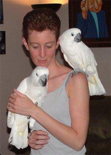 Umbrella White Cockatoo male and female for sale..