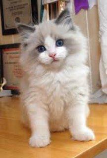الصفحة الرئيسية المجمعة دوول القطط