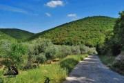 للبيع ارض زراعية بأجمل مناطق جبال محافظة عجلون السياحية