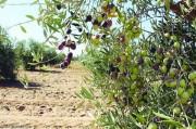 ارض مزروع كاملتا للبيع مقام عليها فيلا في قريه جبا