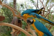 Adorable and lovely Blue and Gold Macaw Parrots Ready Now