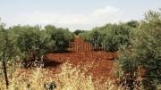 أرض (مزرعة زيتون) في مأدبا 4 دونم للبيع من المالك مباشرة