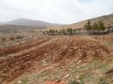 للبيع / أرض زراعية في مأدبا 4 دونم / إستثمارية ممتازة