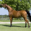 smart and precious warm blooded horse available for sale
