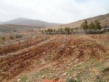 -- للبيع / أرض زراعية في مأدبا 4 دونم / إستثمارية ممتازة
