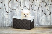 Beautiful Pomeranian Puppies For Sale.